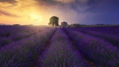 Colors of Provence (Raúl Podadera Sanz) Tags: provenza provence landscape paisaje colors colores fields campos sun lavander lavanda sunset sunrise amazing france francia valensole