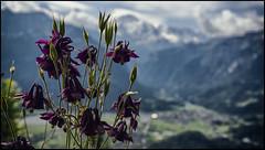 _SG_2017_06_0009_IMG_6804 (_SG_) Tags: schweiz schweizer berge berg alpen suisse switzerland alps mountain peak view interlaken harder kulm harderkulm funicular bernese berner oberland unterseen canton bern harderbahn emmental brienzer see lake brienz