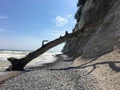 Ins Meer (il.ka15) Tags: kreidefelsen buche absturz steine hühnergötter steilküste stubbenkammer rügen insel abstieg aufstieg