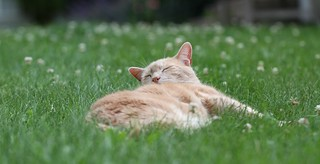 It's the little things... like Jimmy relaxing in tall grass