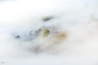 Las nieblas del Pas