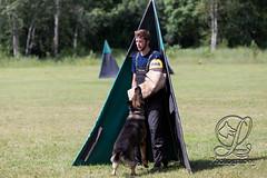 GSD-4619 (jim_lamy) Tags: gsd ipo germanshepherd schutzhund workingdog