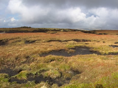 Twinges (Gram Joel Davies (see ablums)) Tags: landscape colour moor yorkshire kinderscout grass peat earth peakdistrict derbyshire