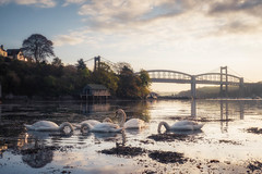 Something Below (Timothy Gilbert) Tags: tamarbridge sunrise royalalbertbridge panasonic swans tamar cornwall gx8 saltash panasonic1235mmf28x