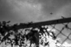 _DSF2439_ORIGINAL-FORMAT (izumi masakazu) Tags: bw streetsnap tokyo light shadow plane airplane fence plant cloud silhouette scenery landscape white 東京 光 影 シルエット 飛行機 空 植物 草 雲 白 白色 sky