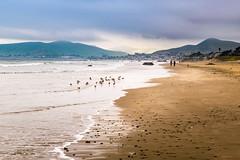 Beach walk (DF Shryock) Tags: seascape ocean landscape shore nature nikond5500 sigma1750mm california pacificocean water beach birds