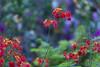 Flora (Arpa Ghosh) Tags: kurnool orvakal orvakallu rock gardens haritha aptdc aptourism andhra pradesh quartz landscape india