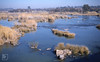 River Vaal reeds. View west from Parys Bridge (Mary Gillham Archive Project) Tags: landscape parys southafrica 68926