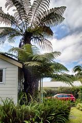 20170703-IMG_3883_HDR Tatati Lodge 08 (hirschwrites) Tags: coromandelpenninsula earth hdr hahei nz newzealand northisland other