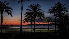 anochecer / sunset (por agustinruizmorilla) Tags: sunset water beach travel island sun ocean tree summer silhouette sand palm dawn resort seashore coconut palma tropical exotic no person agustin ruiz morilla agustinruizmorilla