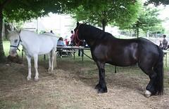 """Fête médiévale """"Gouel ar Soudarded"""" à Lesneven (EricFromPlab) Tags: bretagne finistère lesneven breizh brittany medieval cheval gouel ar soudarded"""