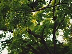 (Jon-Fū, the写真machine) Tags: touchedup jonfu 2017 olympus omd em5markii em5ii em5mkii em5mk2 em5mark2 オリンパス mirrorless mirrorlesscamera microfourthirds micro43 m43 mft μft マイクロフォーサーズ ミラーレスカメラ snapseed japan 日本 nihon nippon ジャパン ジパング japón जापान japão xapón asia アジア asian orient oriental aichi 愛知 愛知県 chubu chuubu 中部 中部地方 outdoors 野外 nature 自然 plant plants 植物 flora