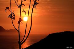 Hojitas (Gaby Fil Φ) Tags: perú sudamérica latinoamérica sunset atardecer ocasos oceánopacífico miraflores lima sol puestadesol naranja parquedelamormirafloreslima maleconesdemiraflores costaverdelima miraflorino atardeceresperuanos pweruviansunset