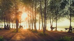 University Life (omardaing) Tags: landscape fog nature sun light tree bright season wood monochrome dawn outdoors çukuova university campus