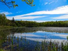 IMG_0688 (rpealit) Tags: scenery wildlife nature weldon brook management area blue heron pond