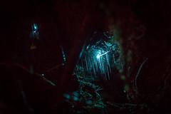 1B1A4628.jpg (Brendon & Keryn) Tags: zealandia night newzealand wellington winter northisland nighttour