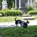 Congressional Cemetery Jun 10, 2017, 11-41 AM_sharing