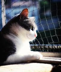 2017-06-22_06-11-39 (mgkm photography) Tags: miau 50mm bokeh bokehphotography cat gato gatinho nature snapseed animais animaisderua d3100