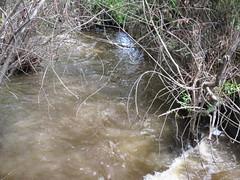 Water, water (jamica1) Tags: kelowna okanagan bc british columbia canada mission creek