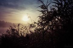Morning Mist (Glenn Cartmill) Tags: loughgall country park lake lough mist sun northern ireland early morning glenn cartmill eos 650d canon uk united kingdom september 2015 sky county armagh co outdoor landscape misty