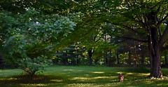 Shizandra Among The Maples (☁☂It's Raining, It's Pouring☂☁) Tags: ddc 2062 floraandfauna dog trees maples bordercolliemix