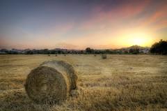 Vida fugaz. (Ramirez de Gea) Tags: alpaca sunset atardecer paja tokinaaf1224mmf4 catalunya cielo sky