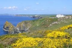 Cornwall, England (east med wanderer) Tags: england uk cornwall lizardpeninsula coast sea cliffs path gorse hotel landscape clouds green yellow worldtrekker
