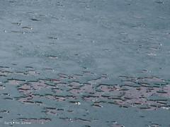 blue-ice-frozen-jarun-lake_