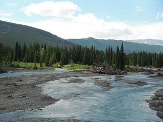 #albertabound #canada  #wilderness #bearcountry