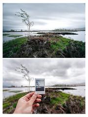 Flowing tree - Polaroid 2 (c.r.photoholic) Tags: scottland schottland langzeitbelichtung polaroid fuji canon 5d mark ii 5dmark2