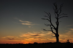 Smile on Saturday (daveknight1946) Tags: smileinsaturday lessismore tree essex gustedhall hockley sunset greatphotographers