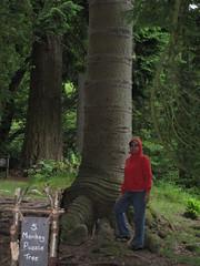 Ullswater-17.10 (davidmagier) Tags: aruna hiking trees matterdale cumbria england gbr