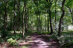 A walk through the woods :) (Powderpuff GP) Tags: dappledlight perspective pathway shadows sunlight trees woods forest