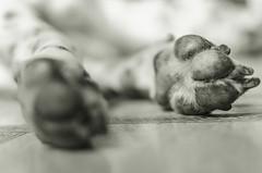 Paws (ruanmayworm) Tags: dog dálmata dalmatian paws preto e branco black white