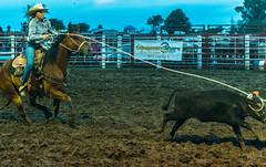 DSC_3925 (alan.forshee) Tags: rodeo horse cow ride fall buck spin twirl bull stallion boy girl barrel rope lariat mud dirt hat sombrero