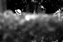 με καπέλο (with hat) (www.webphoto.gr) Tags: nature outdoors closeup blackandwhite defocused plant backgrounds abstract nopeople drop shiny leaf wet macro summer freshness season tree raindrop beautyinnature