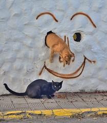 Eye Jump (tcees) Tags: street tarajalejo fuerteventura streetphotography nikon d5200 1855mm cat paint canaries canaryislands calleisidrodíaz urban catfood pavement sidewalk wall face portrait allfreepicturesjuly2017challenge jump stray hole graffiti