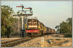 Indian Summer (david.hayes77) Tags: alco ydm4 6731 train02082 govindgarhmalikpur govindgarh rajasthan india 2017 metregauge semaphores dawn ir indianrailways nwr indiansummer