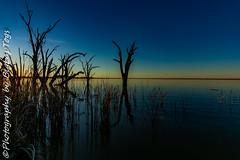 IMG_5390 (biglaptogs) Tags: barmera lakebonney riverland sa states