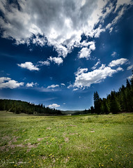 Meadow-1 (j.franknewman) Tags: nature sky cloudsky landscape summer outdoors blue forest tree grass scenics greencolor meadow beautyinnature cloudscape sunlight mountain ruralscene nonurbanscene tranquilscene