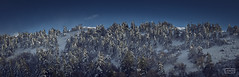 Lo echaremos de menos/ We will miss it (Jose Antonio. 62) Tags: spain españa león pines pinos trees arboles snow nieve cold frío