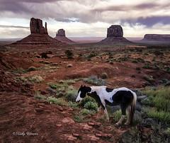Horse in the Valley (kweaver2) Tags: kathyweaver kdxweaver landscape nature horse animal equine navajo tribal park monument valley utah arizona
