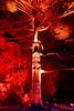 20170531-45-VIvid Light display at Sydney Botanic Gardens (Roger T Wong) Tags: 2017 australia nsw newsouthwales rogertwong sel2470z sony2470 sonya7ii sonyalpha7ii sonyfe2470mmf4zaosscarlzeissvariotessart sonyilce7m2 sydney sydneybotanicalgardens vivid festival illuminated lights night tree
