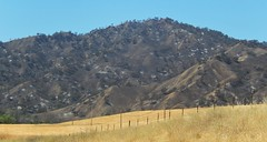 """Aftermath of the """"Winters Fire"""" Wildfire. (Ruby 2417) Tags: winters fire"""