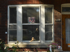 Land Mammals (navejo) Tags: montreal quebec canada window jesus horse elephant