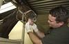 04VS0004_0844 (APHIS.gov) Tags: import export animalidentification animalhealthsafety