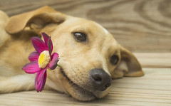 Dog's love (Juan Gabriel Escobedo Robles) Tags: dog cute flower nature animals animal love amor gracias thankyou merci danke obrigado wood
