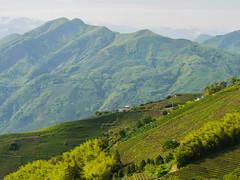 再度訪問二尖 (*泛攝影*) Tags: green 戶外 景深 panasonic gx7 color 探索 dof 台灣 taiwan 植物 性質 nature inexplore