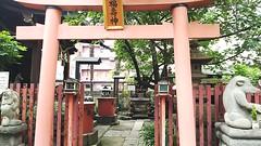 柳森神社 (アルム=バンド) Tags: 東京 神社 秋葉原 柳森神社 狸 タヌキ たぬき 福寿神社