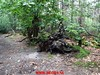 """2017-07-01 Fransche-Kamp        40 Km (4) • <a style=""""font-size:0.8em;"""" href=""""http://www.flickr.com/photos/118469228@N03/35268706200/"""" target=""""_blank"""">View on Flickr</a>"""